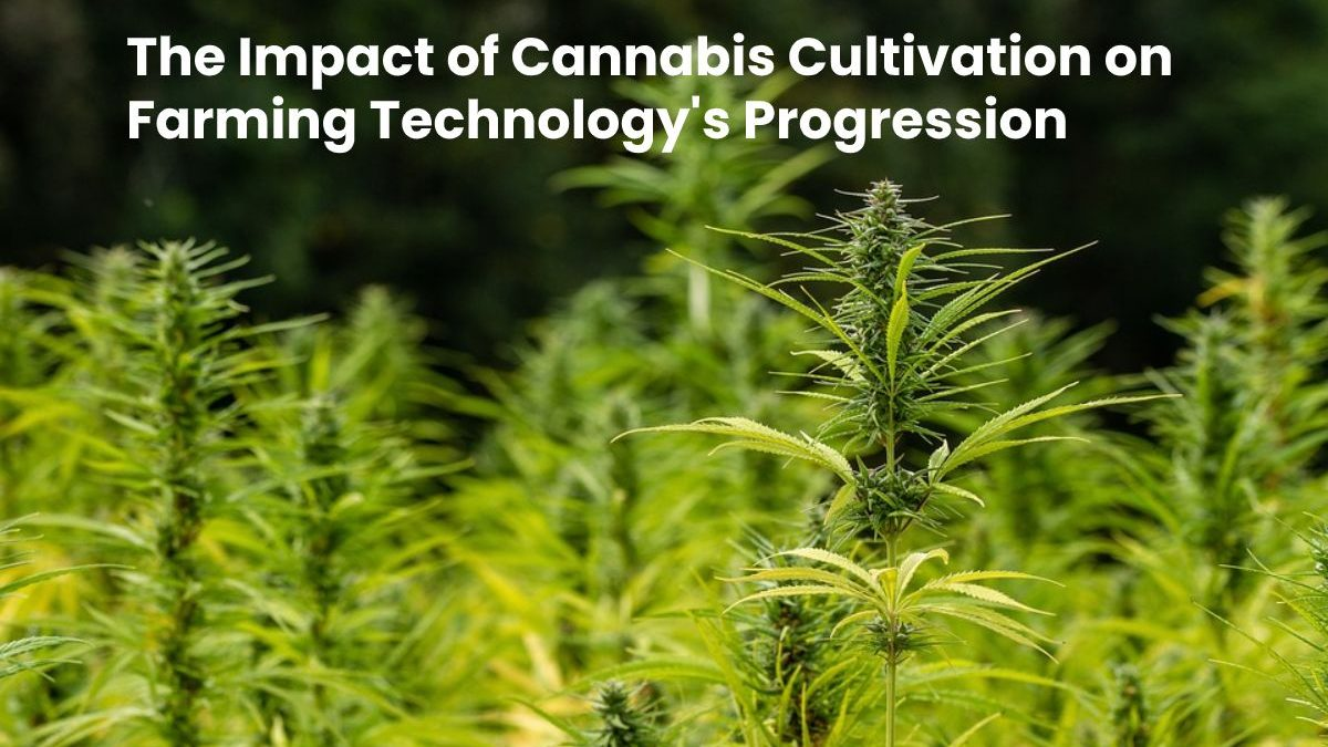 The Significant Impact of Cannabis Cultivation on Farming Technology's Progression
