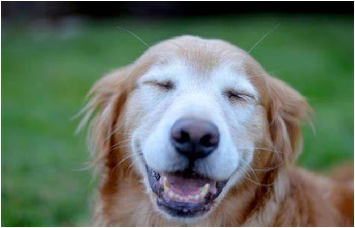 Possible benefits - Benefits Of CBD Oil For Dogs