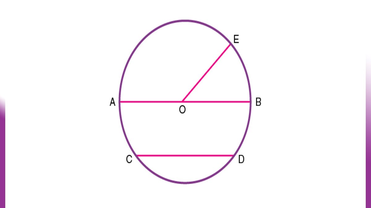 Explain the Sector and Chord in a Circle